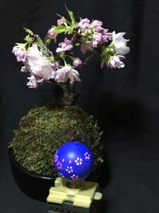 満開の桜とハロ