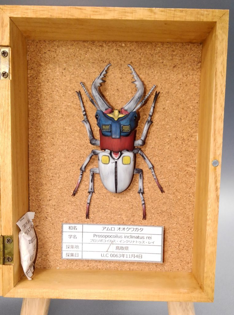 アムロオオクワガタ&バナージオオクワガタの標本 アピールショット1
