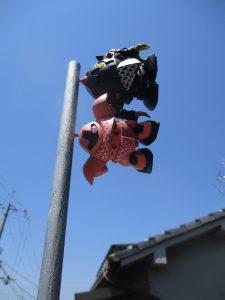 ♪屋根より高い鯉登り~・・・ん? 鯉?