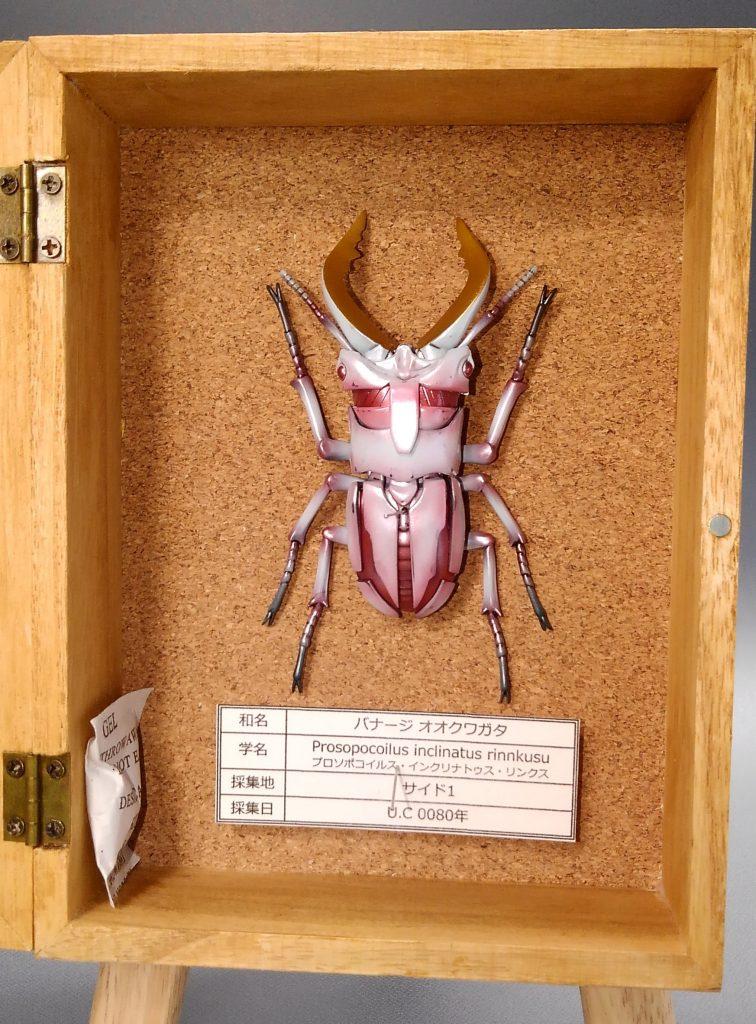 アムロオオクワガタ&バナージオオクワガタの標本 アピールショット2