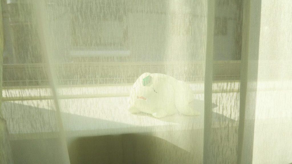 お昼寝モルちゃん アピールショット3