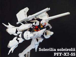 Solerilia soleirolii -ソレイロリア-